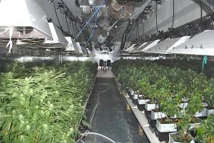 large cannabis grow house hbtv hemp beach tv