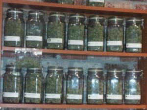 marijuana on a rack shelf hbtv hemp beach tv