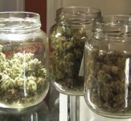 Deadline for Florida medical marijuana petition approaches