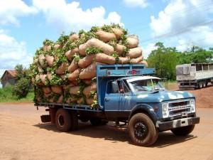 uruguay marijuana truck hbtv hemp beach tv