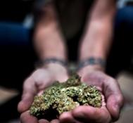 Ganjapreneurs Flock to Colorado Following Marijuana Legalization