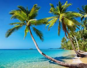 florida beach palm tree hbtv hemp beach tv