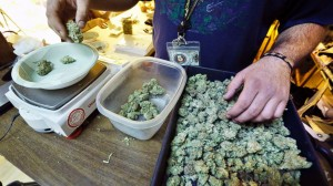 colorado marijuana pot hbtv hemp beach tv