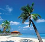 Caribbean countries consider loosening marijuana laws