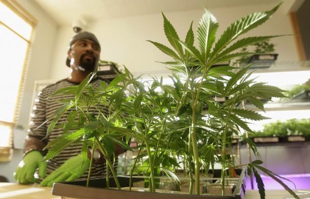 medical marijuana in california hbtv hemp beach tv