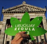 Uruguay may start to import marijuana from Canada