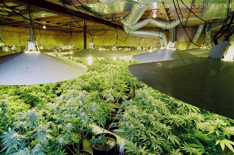 indoor marijuana grow hbtv hemp beach tv