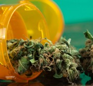 Fewer Pain Pill Overdoses In States With Legal Medical Marijuana