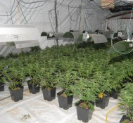 Proponents look to expand marijuana legalization in November