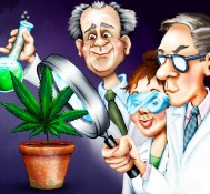 Finally, Some Hard Science on Medical Marijuana for Epilepsy Patients