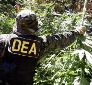 Denver Police, Feds Raid Marijuana Grow Operations