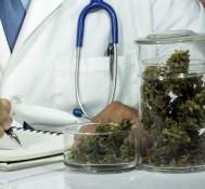 Can medical marijuana solve our opioid addiction problem?