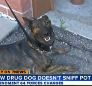 What Good Is A Pot-Sniffing Dog When Pot Is Legal?