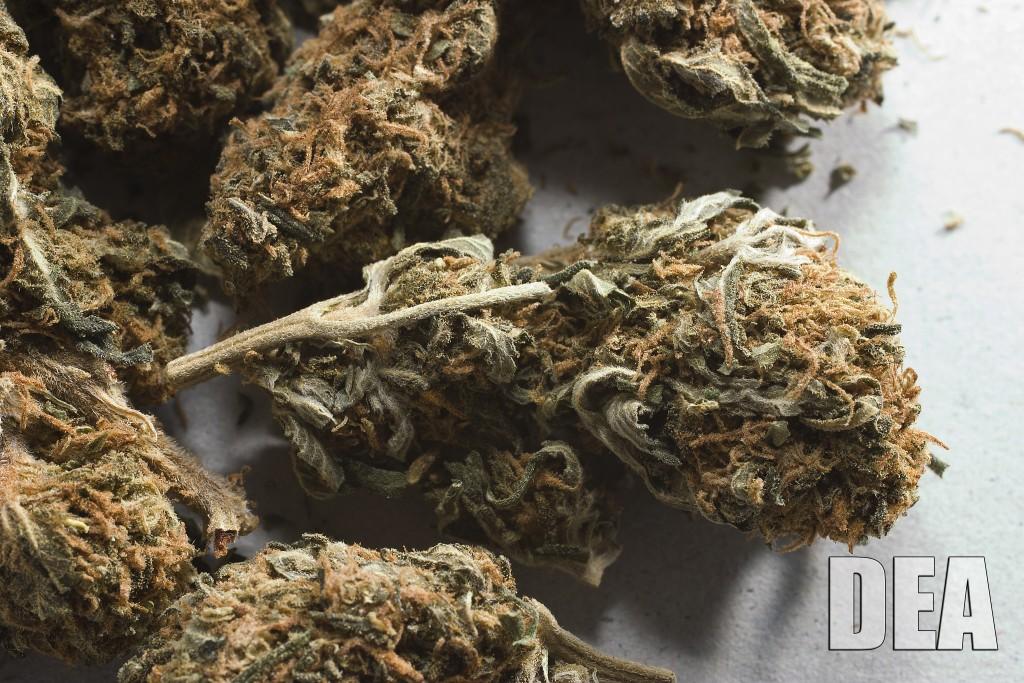 dea marijuana hbtv hemp beach tv 2015 420